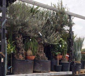 Unsere erste Pflanzenlieferung